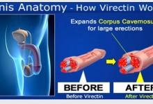 Penis-Anatomi.jpg